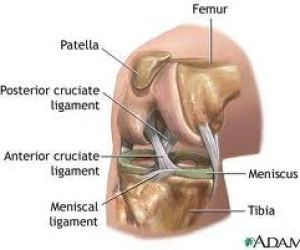 Anterior Cruciate Ligament (ACL) Injury in Volleyball Essay