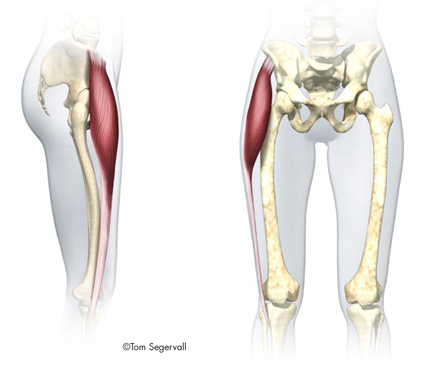 tensor fascia latae TFL muscle