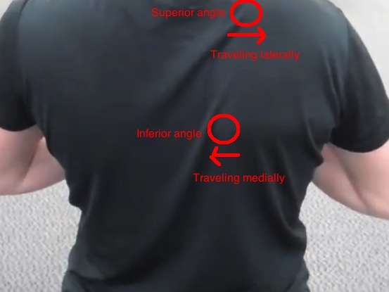 Scapular winging serratus issues with ANGLES