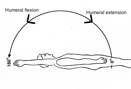 Shoulder flexion and extension supine with arrows