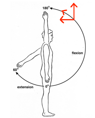 Shoulder flexion and extension with arrows
