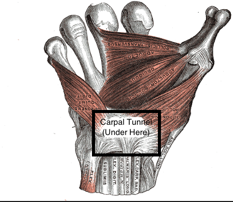 Gray's anatomy flexor retinaculum with carpal tunnel