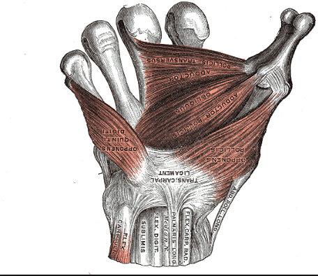 Palm of the hand.