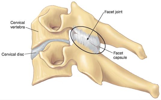 Facet joints drawing cervical