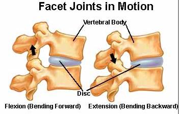 Facet joints forward and backward bending