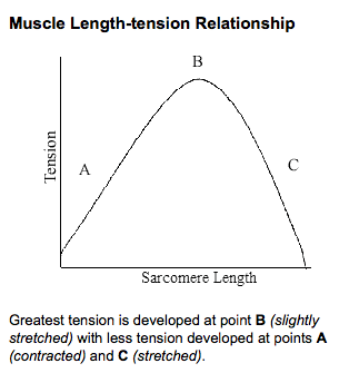 Length tension muscle ExRx