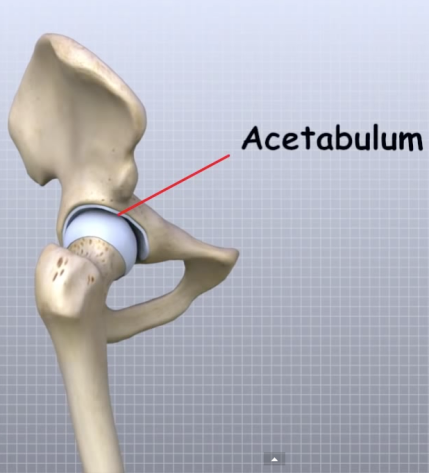 Rotation Anatomy Hip mobility issues in...