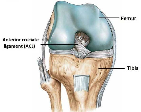 An Underappreciated Aspect Of Acl Injury Prevention And Rehab B