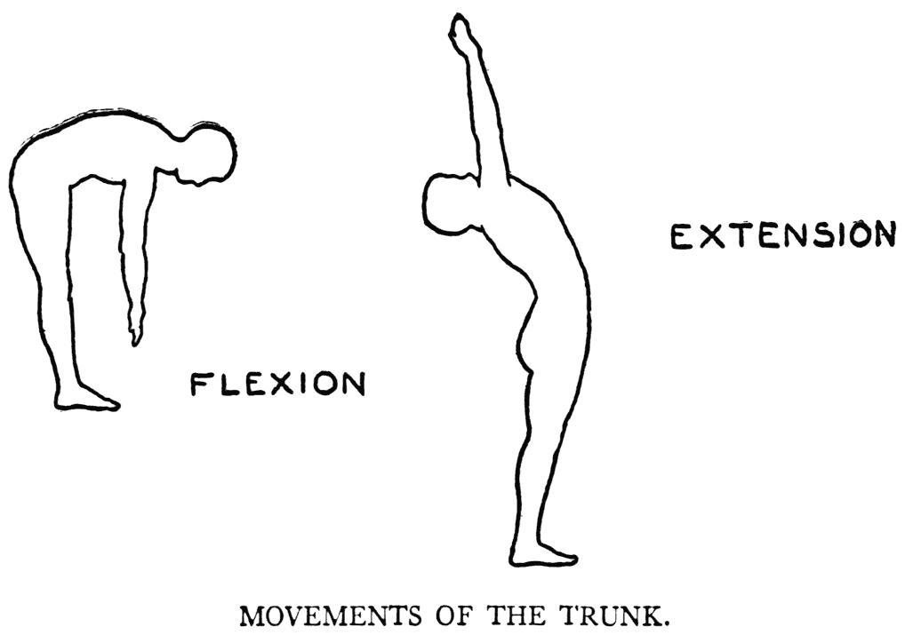 lumbar extension : flexion trunk | b-reddy.org
