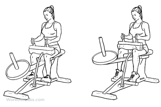 seated calf raise drawing exercise